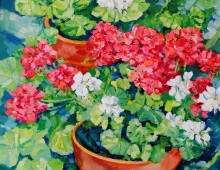 Summer Geraniums