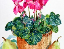 Nantucket Cyclamen