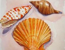 Pink Sand Shells