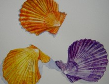 Scallop-Shells