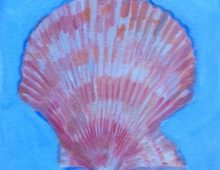 Coral Scallop