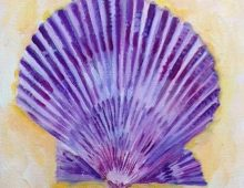 Purple Scallop