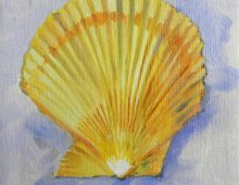 Yellow Scallop
